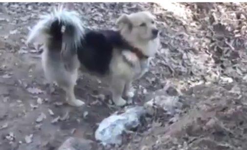 Cachorro faz visitas diárias ao túmulo do tutor na Turquia
