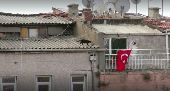 """Estreia no Brasil o filme turco """" Gatos """""""