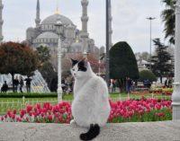 Filme ' Gatos ' mostra a natureza livre dos felinos em Istambul