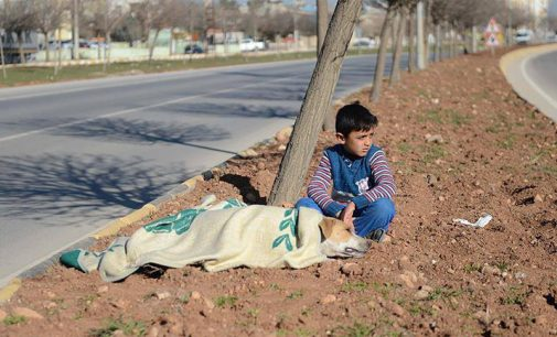 Garoto refugiado conforta cadela atropelada na Turquia até a ajuda chegar