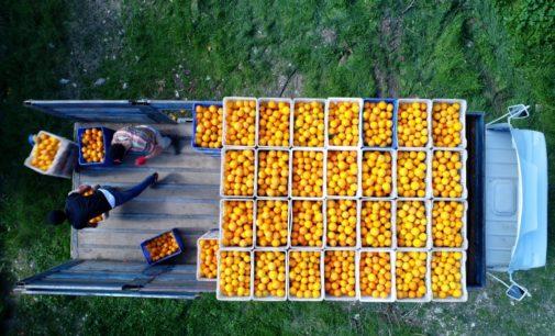 Rússia devolve 370 toneladas de tangerinas da Turquia devido a pragas
